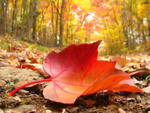 Cover photo for Register Now for Fall Gardening Classes