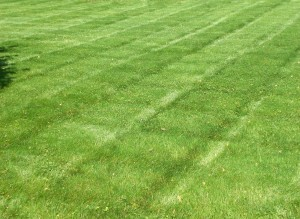 striped mowed lawn