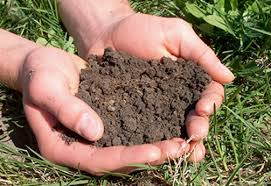 Cover photo for Soil Testing Availability and Information for Homeowners