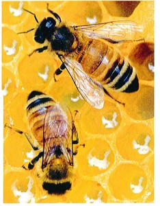 Cover photo for Troxler Announces New Beehive Grant Program.