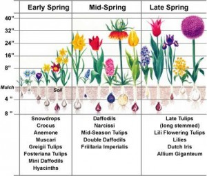 Cover photo for Choosing Spring Bulbs