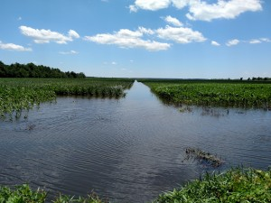 Cover photo for Impact of Flooding in Corn