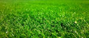 Seeded fertilized lawn