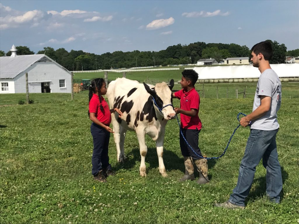 two children and an adult leading a dairy cow