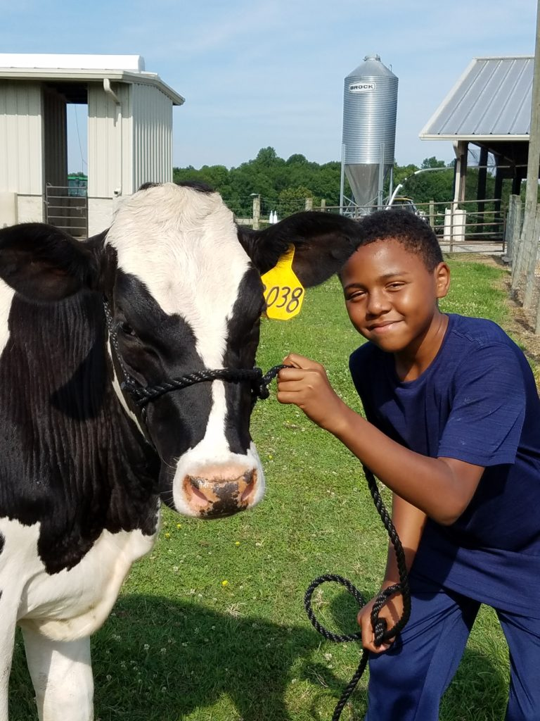 young boy with a dairy cow