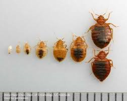 Cover photo for Got Bed Bugs????