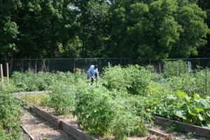 Cover photo for Community Garden Waitlist