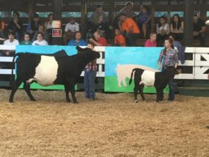 Cover photo for Catawba Valley Beef Expo and Lamb & Goat Shows