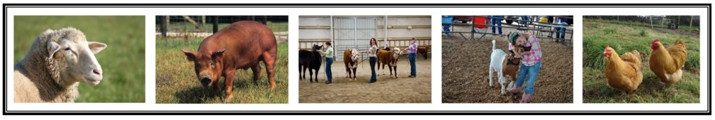 pictures of livestock