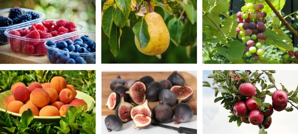 pictures of fruit