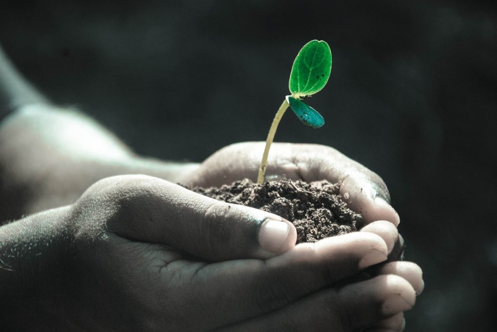 child holding seedling